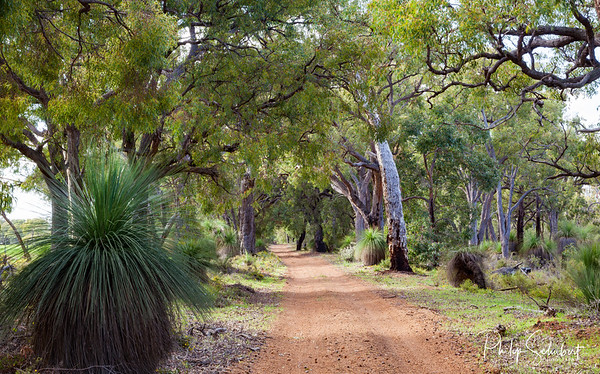 Western Boundary Road - Julimar Forest