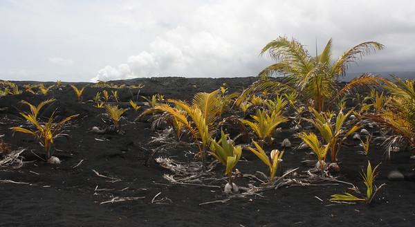 Lava Rock Vegetation