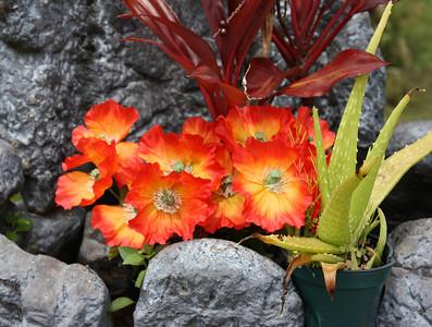 Ilima Rock Garden