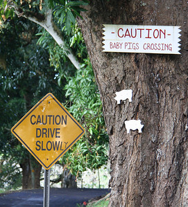 Warning about Baby Pigs Crossing