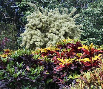 Foliage