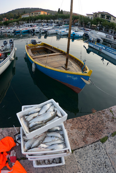A fisherboat and its catch