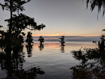 Blue Cypress Lake at sunrise
