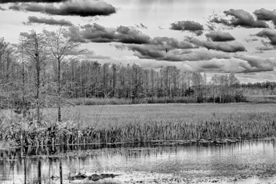 Local wetlands area in monochrome