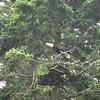 Alaska Slocum Arm Eagle_06