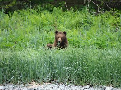 Alaska 2013 Photos