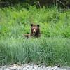 Alaska Bear Lisianske inlet   _04