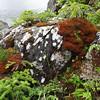 Alaska Zhilo Cove  11 species   _33