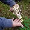 Alaska Ford Arm skull?_00