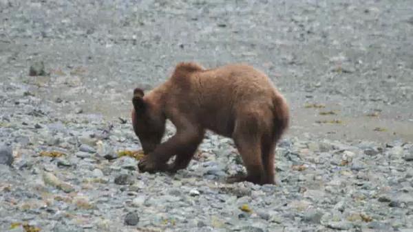 Alaska 2013 Movies