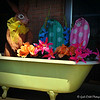 """March 23, 2015<br /> <br /> """"BUNNY IN THE BATHTUB""""<br /> <br /> """"What sunshine is to flowers, smiles are to humanity. These are but trifles, to be sure; but scattered along life's pathway, the good they do is inconceivable."""" ~ Joseph Addison<br /> <br /> My Homepage:  <a href=""""http://www.Godschild.smugmug.com"""">http://www.Godschild.smugmug.com</a>"""