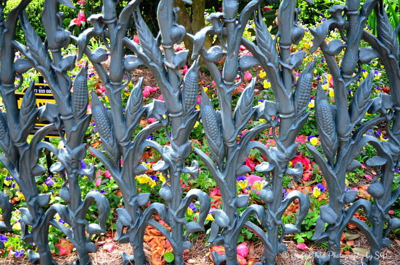 """March 10, 2014<br /> <br />  """"COLONEL SHORT'S VILLA and THE CORNSTALK FENCE with MORNING-GLORIES""""<br /> <br />  """"My home is in Heaven. I'm just traveling through this world."""" ~ Evangelist Billy Graham<br /> <br />  The Garden District in New Orleans was settled in the 1850's by successful entrepreneurs — the """"nouveau riche"""" of that time. They built large, elegant mansions exemplifying many architectural styles, including Greek Revival, Italianate and Queen Anne Victorians.<br /> <br />  """"This house was built (in 1835) by architect Henry Howard for Kentucky Colonel Robert Short. The story goes that Short's wife complained of missing the cornfields in her native Iowa, so he bought her the cornstalk fence. But a recent owner's revisionist explanation is that the wife requested it because it was the most expensive fence in the building catalog. Second Civil War occupational governor Nathaniel Banks was quartered here."""" ~ Reprinted text from Frommer's<br /> <br />  """"The fence is similar to one in front of the Cornstalk Hotel (915 Royal Street) in the French Quarter. The Garden District cast-iron fence, in cornstalk pattern, was erected by Wood & Miltenberger, the New Orleans branch of the Philadelphia foundry of Wood & Perot where the French Quarter fence was cast."""" ~ Reprinted text from here: <a href=""""http://www.inetours.com/New_Orleans/Garden_District.html"""">http://www.inetours.com/New_Orleans/Garden_District.html</a><br /> <br />  Colonel Short's Villa (aka The Short-Favrot House)<br />  The Garden District<br />  1448 Fourth Street<br />  New Orleans, LA"""