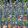 """March 10, 2014<br /> <br />  """"COLONEL SHORT'S VILLA and THE CORNSTALK FENCE with MORNING-GLORIES""""<br /> <br />  """"My home is in Heaven. I'm just traveling through this world."""" ~ Evangelist Billy Graham<br /> <br />  The Garden District in New Orleans was settled in the 1850's by successful entrepreneurs — the """"nouveau riche"""" of that time. They built large, elegant mansions exemplifying many architectural styles, including Greek Revival, Italianate and Queen Anne Victorians.<br /> <br />  """"This house was built (in 1835) by architect Henry Howard for Kentucky Colonel Robert Short. The story goes that Short's wife complained of missing the cornfields in her native Iowa, so he bought her the cornstalk fence. But a recent owner's revisionist explanation is that the wife requested it because it was the most expensive fence in the building catalog. Second Civil War occupational governor Nathaniel Banks was quartered here."""" <br /> <br /> ~ Reprinted text from Frommer's<br /> <br />  """"The fence is similar to one in front of the Cornstalk Hotel (915 Royal Street) in the French Quarter. The Garden District cast-iron fence, in cornstalk pattern, was erected by Wood & Miltenberger, the New Orleans branch of the Philadelphia foundry of Wood & Perot where the French Quarter fence was cast.""""<br /> <br />  ~ Reprinted text from here: <br /> <br /> <a href=""""http://www.inetours.com/New_Orleans/Garden_District.html"""">http://www.inetours.com/New_Orleans/Garden_District.html</a><br /> <br />  Colonel Short's Villa (aka The Short-Favrot House)<br />  The Garden District<br />  1448 Fourth Street<br />  New Orleans, LA"""