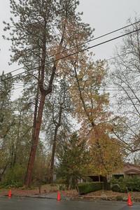 2017_11_17_Tree removal, Collin Pinatelli etc
