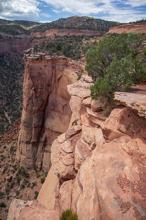 Colorado National Monument (locally referred to as The Monument) is a National Park Service unit near the city of Grand Junction, Colorado. Sheer-walled canyons cut deep into sandstone and granite–gneiss–schist rock formations. This is an area of desert land high on the Colorado Plateau, with pinyon and juniper forests on the plateau. The park hosts a wide range of wildlife, including red-tailed hawks, golden eagles, ravens, jays, desert bighorn sheep, and coyotes. Activities include hiking, horseback riding, road bicycling, and scenic drives; a visitor center on the west side contains a natural history museum and gift shop. There are scenic views from trails, Rim Rock Drive, which winds along the plateau, and the campground. Nearby are the Book Cliffs and the largest flat-topped mountain in the world, the Grand Mesa.  The monument's feature attraction is Monument Canyon, which runs the width of the park and includes rock formations such as Independence Monument, the Kissing Couple, and Coke Ovens. The monument includes 20,500 acres much of which has been recommended to Congress for designation as wilderness.
