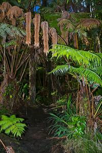 Kilauea Iki Crater Trail.