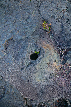 When lava flows fast and hits a tree the lava crusts over fast. Later the tree burns out and leaves this hole.