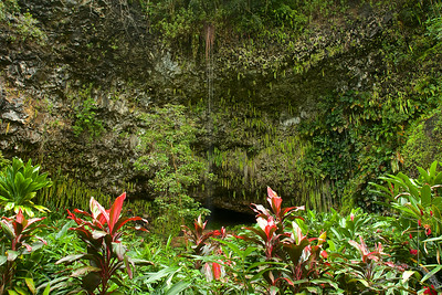 Fern Grotto, You can take a boat ride from Smith's Luau to get to this place on Kauai. Weddings are preformed in the cave at the Grotto.