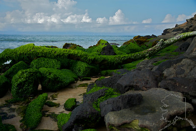 Moss covered rocks on the shore.