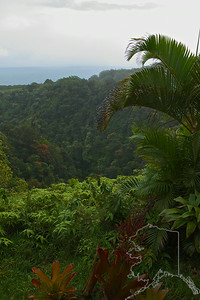 Puohokamoa Valley on the Hana highway.