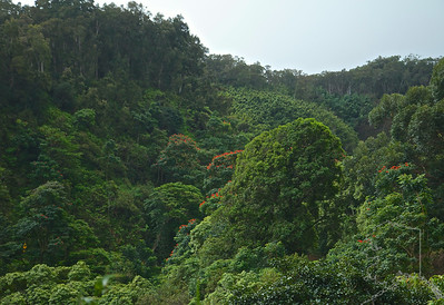 Rain Forest on Hana Road.