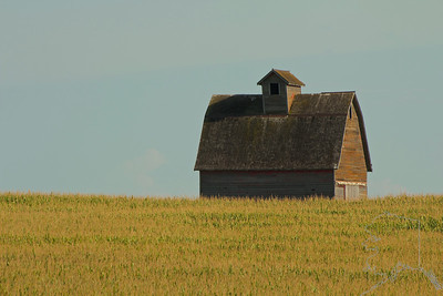 Corn Crib in the middle of a corn field in Iowa. These look like barns but are used to air out and dry the corn.