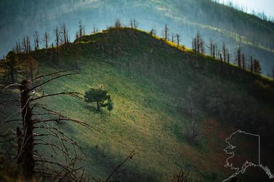 White Mountain Wilderness
