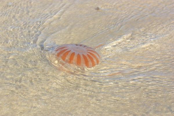 Jelly on the beach