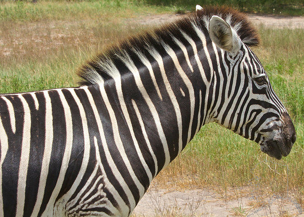 Found these Zebra on a back road in Texas.