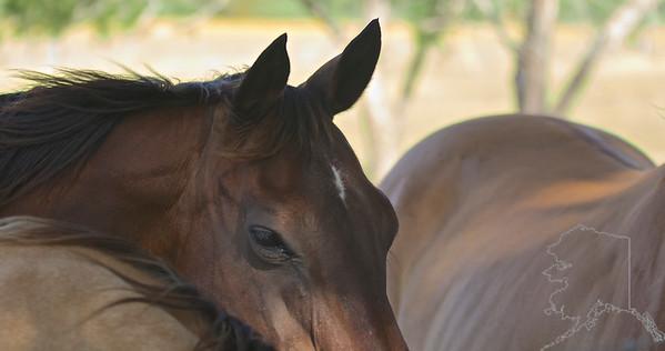 Horses talk with their ears.