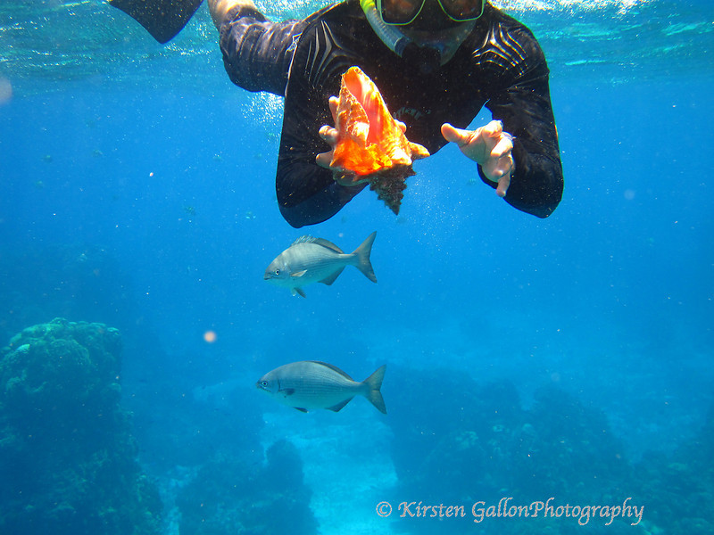 Our snorkel guide with a live conch.  You can't keep those.