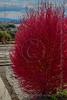 A very interesting plant I found in a Nature preserve in Hakone.