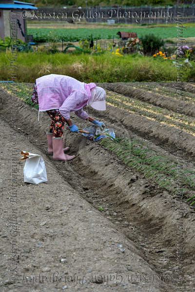 This scene amazed me in the way this woman was hand planting each scallion bulb in a very vast field.  I can't imaging the hours of labor it took for her to plant the whole field.