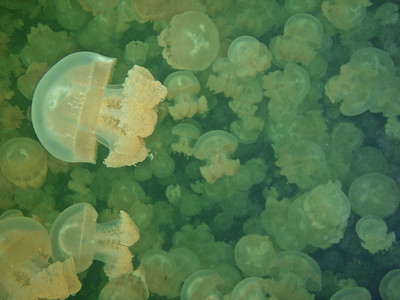 Ongeim'l Tketau (Jellyfish Lake)