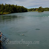 Sterling Highway, Kenai River, on the way to Homer Alaska<br /> Photography by: Ccreative Images Photography. <br /> All rights reserved.