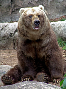 2006-02-20  Bear at Taronga Zoo, Australia