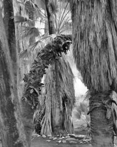 PalmCanyon2013-005bw