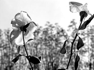 Flowers in Rodin's garden