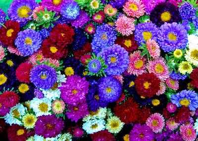 Flower Market, Paris France