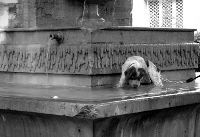 Dog in Fountain, Paris France