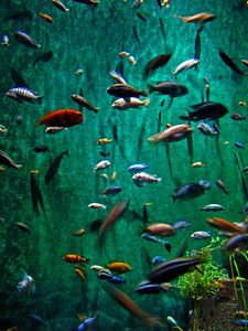 Aquarium, Lincoln Park Zoo, Chicago