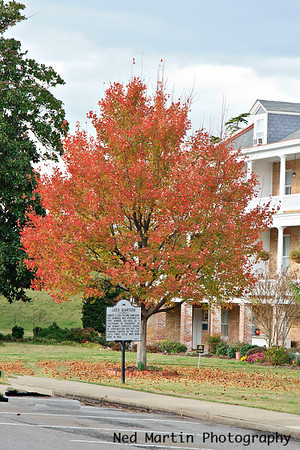 Tree in front of Officers' Quarters, Fort Munroe