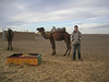 Richard choosing his camel - Now will this one be nice to me?