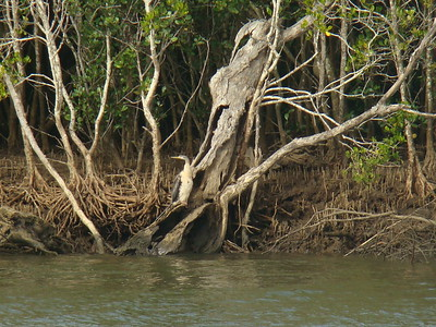 Booball wetlands, Brisbane, Queensland