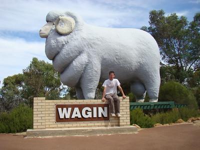 Moi et le belier geant de Wagin, la fierte locale...