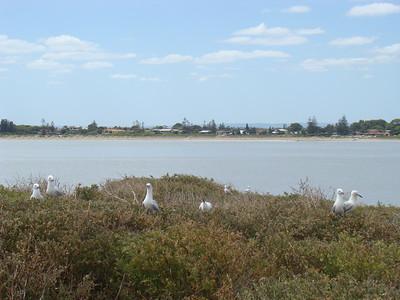 Rockingham, vu depuis Penguin Island