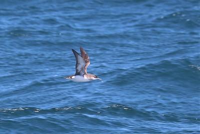 Hauraki Gulf