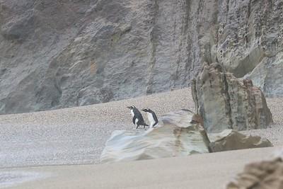 Haast - Munro Beach
