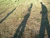 Shadows, Okavango Delta