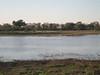Crocodile rests on opposite bank - Okavango Delta